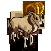 Gold Oryx