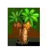 Twin Headed Palm Tree